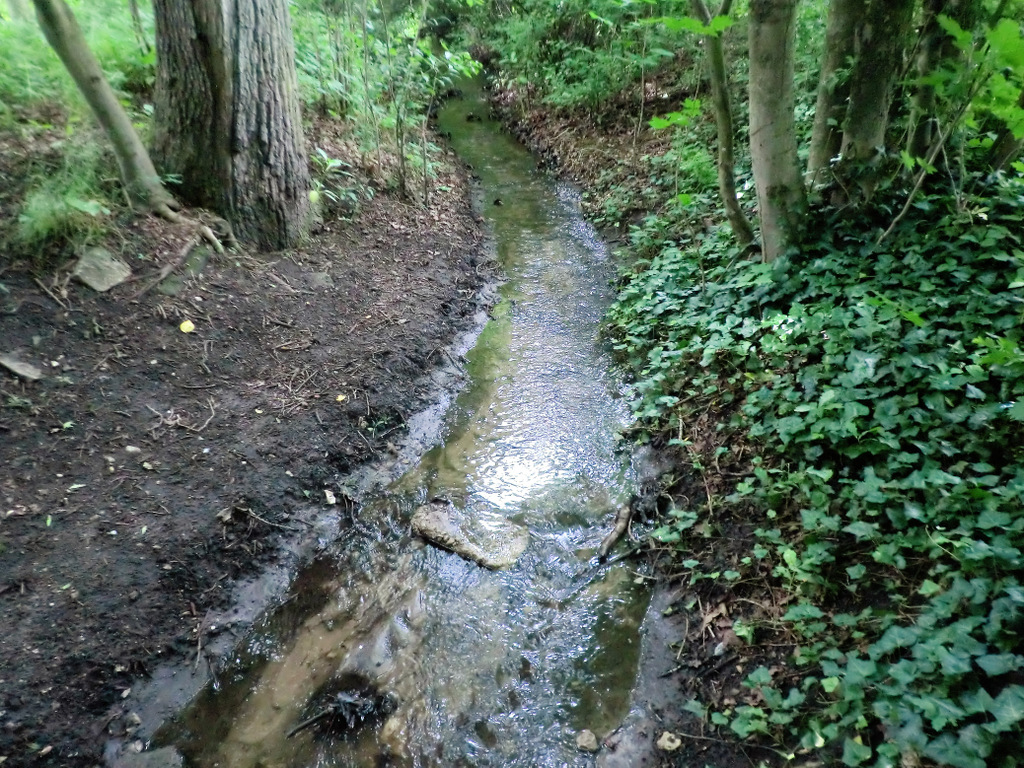 Bachlauf durch den Wald