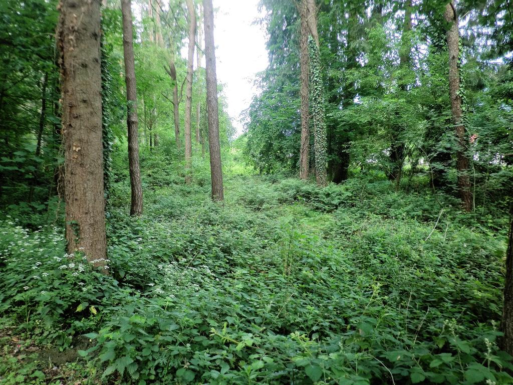 Wald am Bachlauf