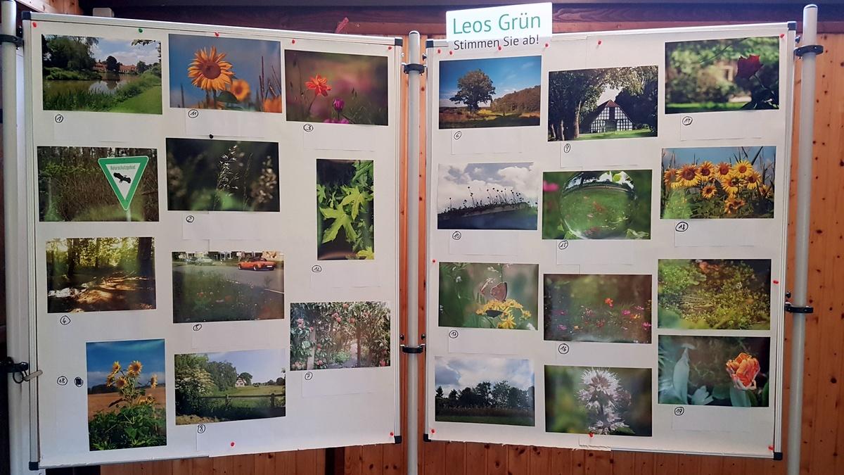 Leos Grün Fotowettbewerb