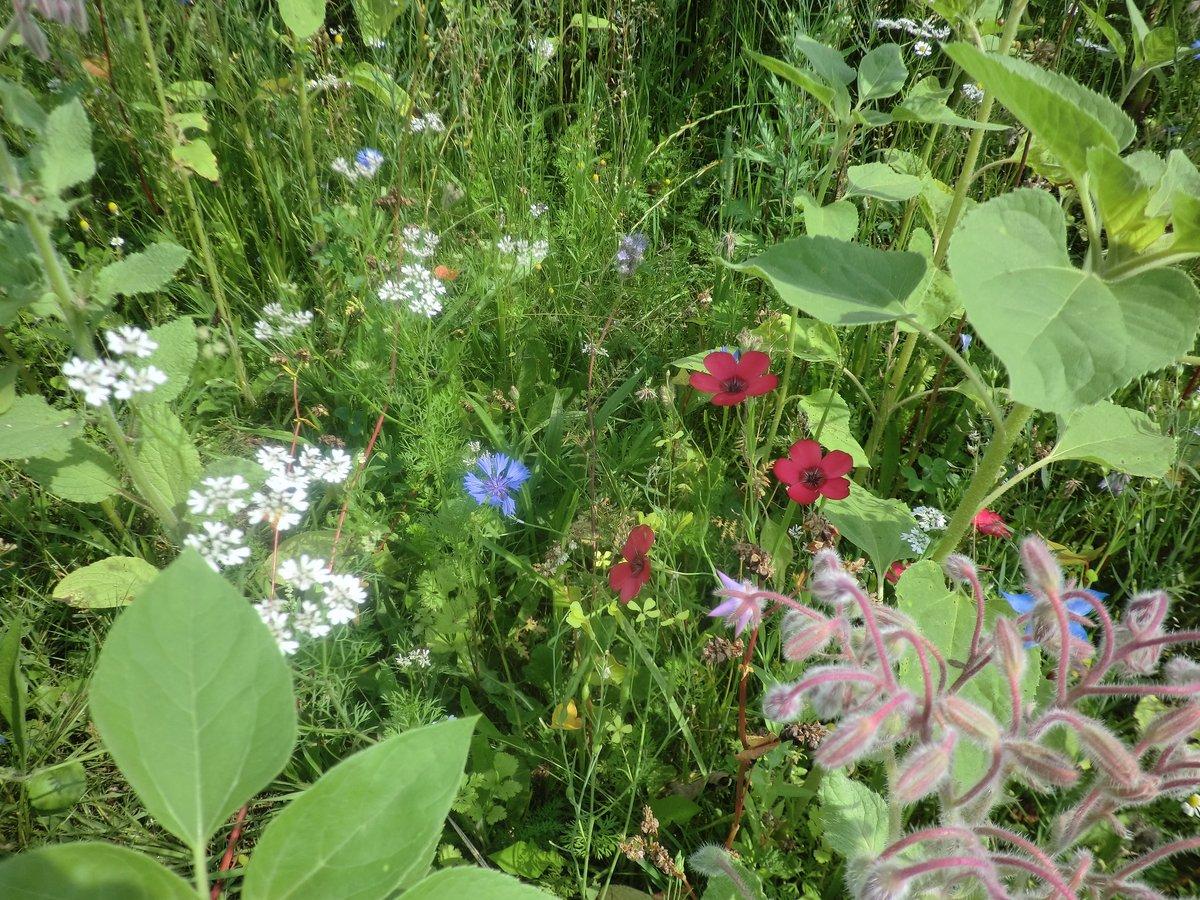 Am Plaßgraben: Bunte Blütenvielfalt