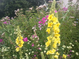 (c)NABU Leopoldshöhe/Thies: Blühinseln lassen sich nahezu überall schaffen.